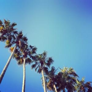 Palmiers Midem Cannes